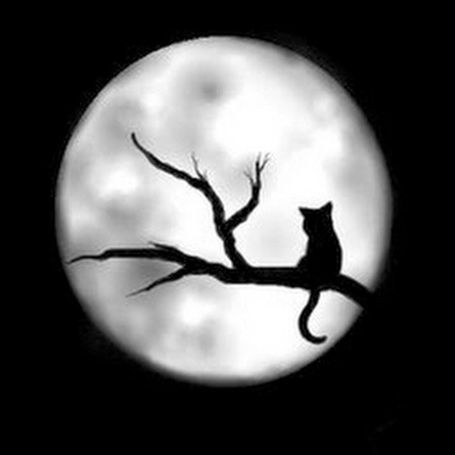 Cómo la luna llena afecta a tu mascota