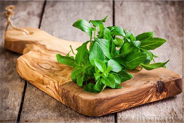 rituales con plantas protectoras