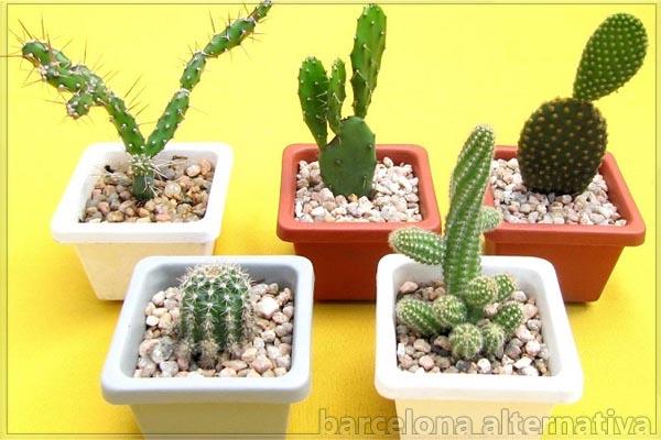 Plantas Protectoras